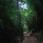 Những nơi không thể không đến để chụp ảnh cưới ở Tam Đảo